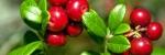Лінія Чистих рослин (моно) - таблетовані форми
